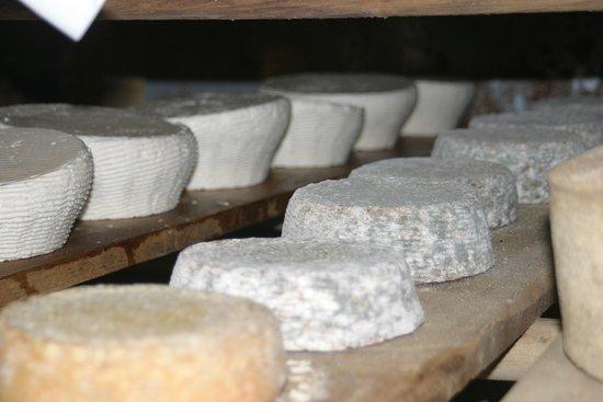 Созревание сыра